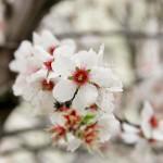 """""""Le stagioni sono ciò che una sinfonia dovrebbe essere: quattro movimenti perfetti, in armonia l'uno con l'altro."""" #Primavera"""